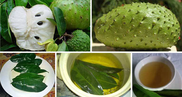 Leaves of Soursop to Kill Cancer Cells